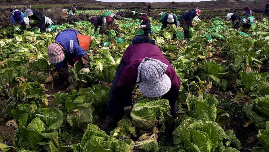 दक्षिण कोरियाले स्वदेश फर्किन नपाएका श्रमिककोे भिसा १ वर्ष थपिदिने